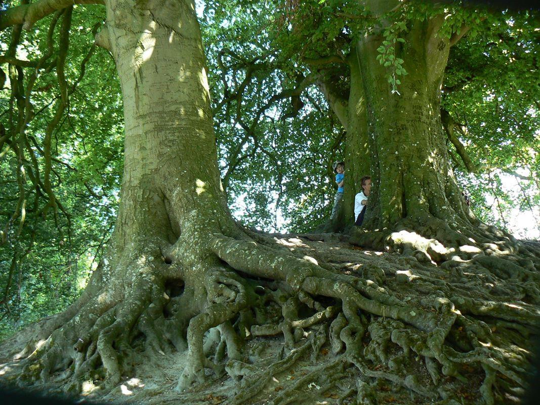 Il boschetto sull'altura di Avebury