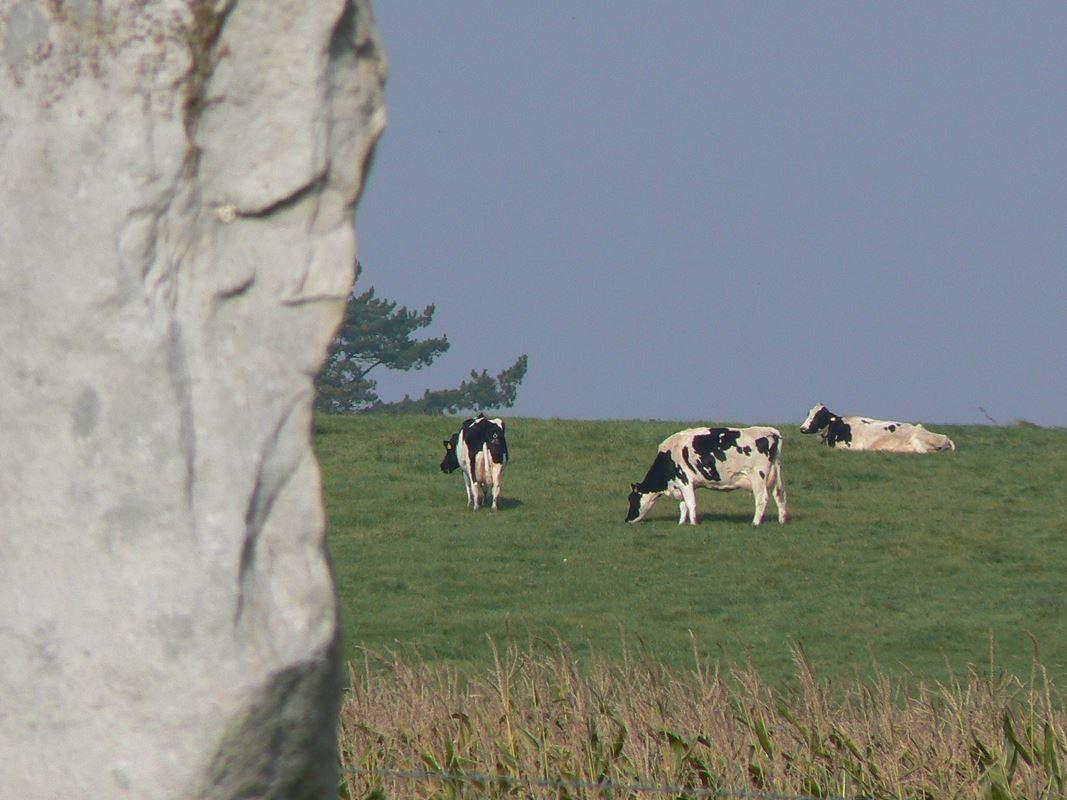 Il sito archeologico di Avebury si trova immerso nel verde della campagna inglese, tra pascoli e campi coltivati